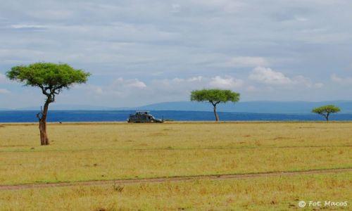 Zdjęcie KENIA / Park Narodowy Masai Mara / safari w Masai Mara / Safari