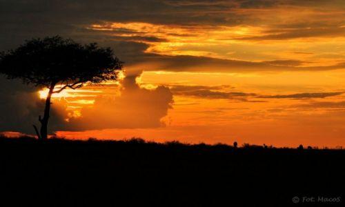 Zdjęcie KENIA / Park Narodowy Masai Mara / safari w Masai Mara / Zachód słońca