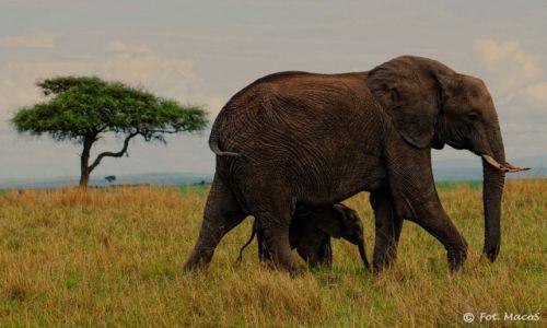 Zdjęcie KENIA / Park Narodowy Masai Mara / safari w Masai Mara / Rodzinka