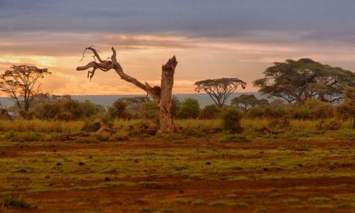 Zdjecie KENIA / Park Amboseli / Park Amboseli / Wieczór w Amboseli