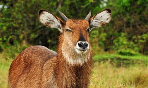 Zdjecie KENIA / Park Narodowy Masai Mara / safari w Masai Mara / ... co ty na to ;)