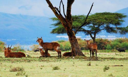 Zdjęcie KENIA / Jezioro Naivasha / Wyspa Crescent / Na odpoczynku