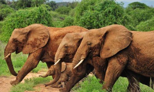 Zdjecie KENIA / Park Narodowy Samburu / safari w Samburu / Rodzinka