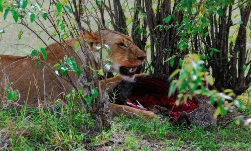 Zdjecie KENIA / Park Narodowy Masai Mara / safari w Masai Mara / �niadanko