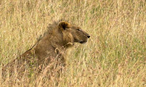 Zdjęcie KENIA / NP Masai Mara / NP Masai Mara / Dzień kota
