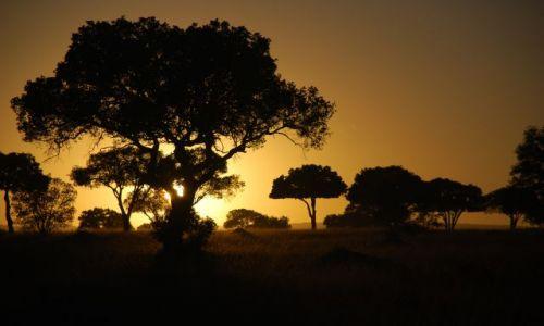 Zdjecie KENIA / MASAI MARA / SAFARI MASAI MARA / Wsch�d s�o�ca 6