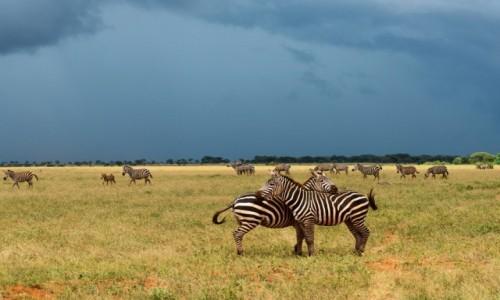 Zdjęcie KENIA / TSAVO EAST / gdzieś po drodze / Kenya