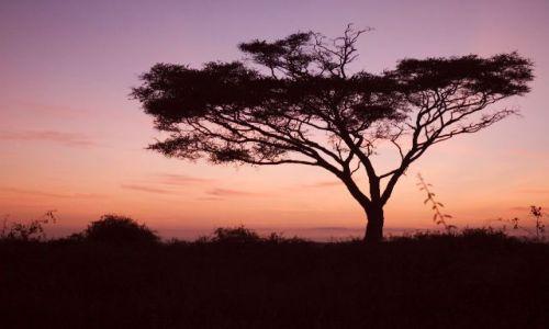 Zdjecie KENIA / brak / Amboselli / Kenijska akcja o wschodzie słońca