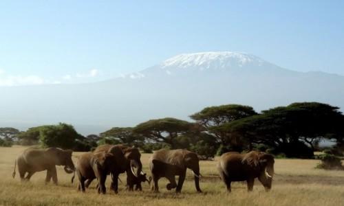 Zdjecie KENIA / Amboseli / Kenia/Kilimand�aro / Amboseli