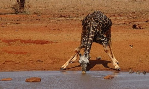 KENIA / - / Kenia  / Kenia Safari