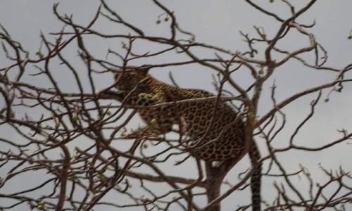 Zdjecie KENIA / Kenia  / Kenia  / Kenia Safari