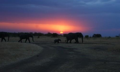 Zdjecie KENIA / masai mara / safari / Zach�d s�o�ca w