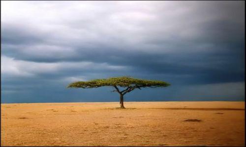 Zdjęcie KENIA / Masai Mara / gdzies na sawannie / Samotne drzewo