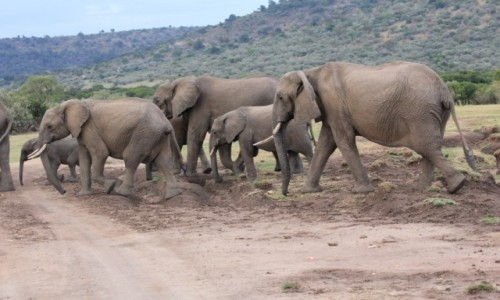 Zdjęcie KENIA / Masai Mara / Masai Mara / Safari