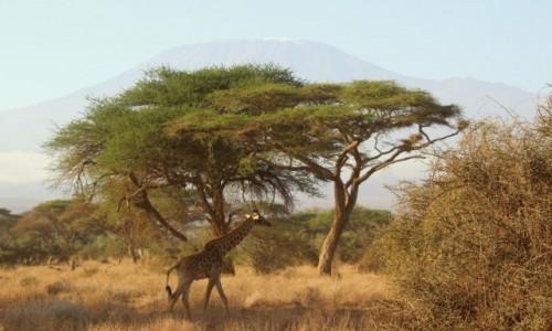 Zdjęcie KENIA / Amboseli / Amboseli / Trzy symbole Afryki