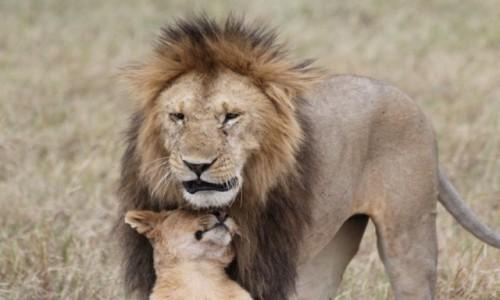 Zdjecie KENIA / -Masai Mara / Masai Mara / Wielka piątka niestety bez lamparta