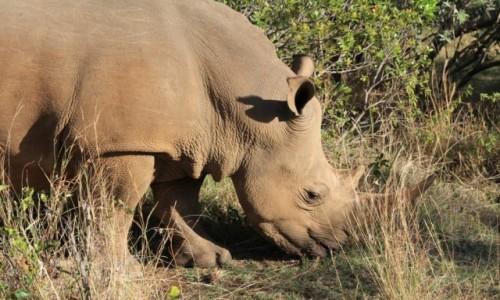 Zdjęcie KENIA / -Masai Mara / Masai Mara / Wielka piątka niestety bez lamparta