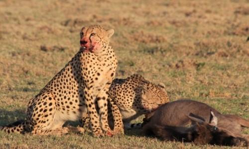 KENIA / -Masai Mara / Masai Mara / Wielka piątka zamiast lamparta