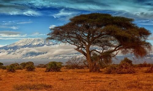 Zdjecie KENIA / Amboseli / Amboseli / Amboseli i Kili