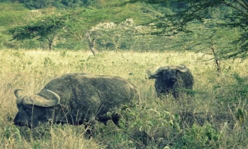 Zdjecie KENIA / Nakuru Lake National Park  / Nakuru Lake National Park  / Spotkanie z baw