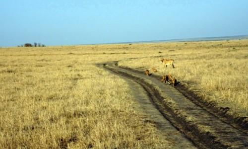 Zdjecie KENIA / Rezerwat Masai Mara / Masai Mara  / Droga na której