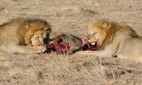 Zdjecie KENIA / Masai Mara  / Park Norodowy / Śniadanie w Mas