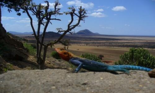 Zdjecie KENIA / Tsavo East / Park Tsavo East / Foto Safari
