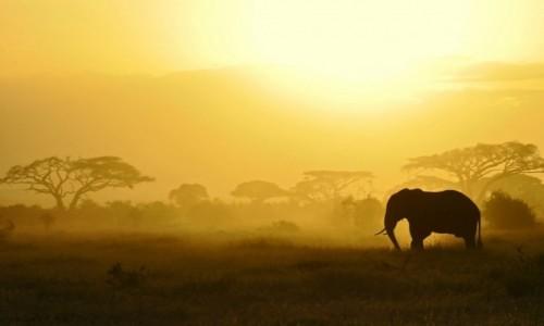 KENIA / granica z Tanzanią / Park Narodowy Amboseli / Polowanie na zachód słońca