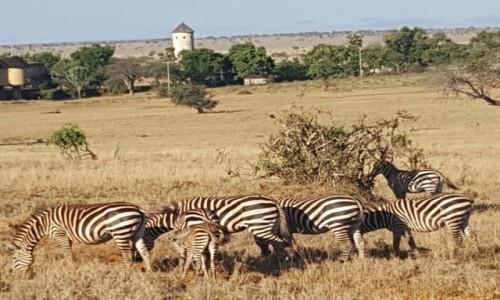 Zdjecie KENIA / Mombasa / Tsavo National Park / Sfari