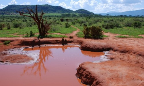 Zdjęcie KENIA / Między Nairobi a wybrzeżem / Park Narodowy Tsavo / Ulubione miejsce słoni
