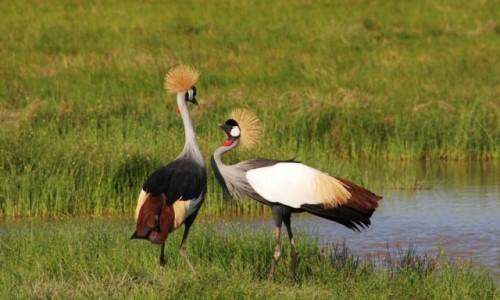 KENIA / Między Nairobi a wybrzeżem / Park Narodowy Tsavo / Wpatrzeni