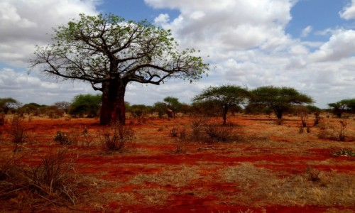Zdjecie KENIA / Kenia wschodnia / Tsavo East / Sawanna