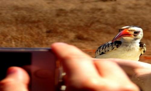 Zdjęcie KENIA / Kenia wschodnia / Tsavo East / Ptasia sesja