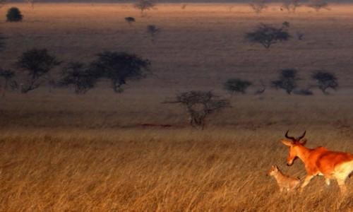 Zdjęcie KENIA / Kenia Wschodnia / Tsavo East / Mała antylopa