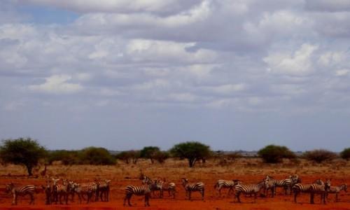 Zdjęcie KENIA / Kenia Wschodnia / Tsavo East / Biało-czarny świat