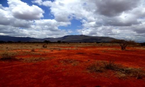 Zdjęcie KENIA / Kenia Wschodnia / Tsavo East / Sawanna