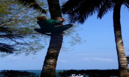 Zdjecie KENIA / Kenia Nadbrzeżna / Diani Beach / Po kokosa