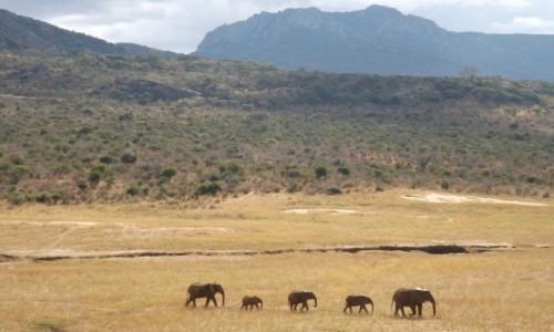 Zdjęcie KENIA / -Kenia / Kenia / kenia