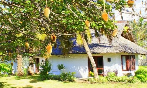 Zdjecie KENIA / - / Mombasa / Dom