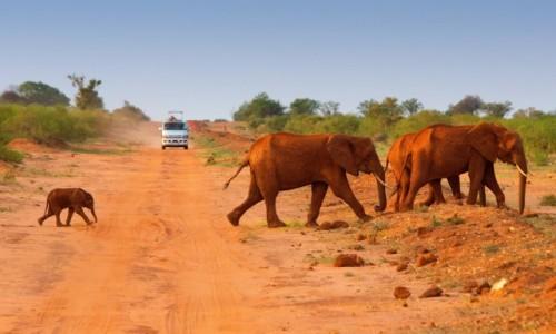 Zdjecie KENIA / Tsavo / Tsavo East / Słonie w Tsavo