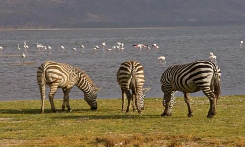 Zdjęcie KENIA / Nakuru NP / tamże / W 3D