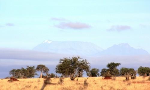 Zdjecie KENIA / Taita Hills / Taita Hills /
