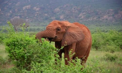 Zdjecie KENIA / Mombasa/Diani/Malindi / Mombasa/Diani/Malindi / Safari w Kenii