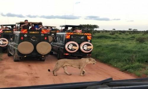 Zdjecie KENIA / Mombasa/Diani/Malindi / Tsavo East / Dzisiaj napotkane lwy z Tsavo East