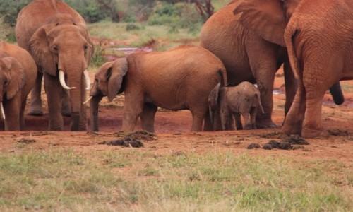 Zdjecie KENIA / - / Tsavo / powitanie z Afryką