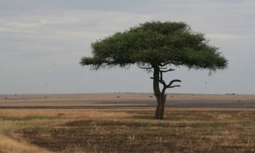 KENIA / Masai Mara / Sawanna / Łąka po horyzont