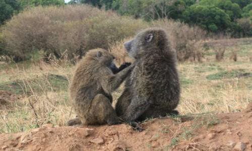 Zdjecie KENIA / Masai Mara / Sawanna / Rodzinna scenka