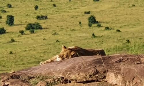 Zdjecie KENIA / Masai  / Mara / Śpiąca królewna
