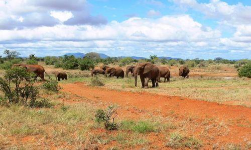Zdjęcie KENIA / Kenia wschodnia / Tsavo East National Park / Czrwone słonie z Tsavo Park