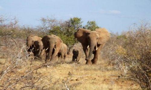 KENIA / Park Narodowy Tsavo East / w drodze do Lugards Falls / chyba trzeba zacząć się bać